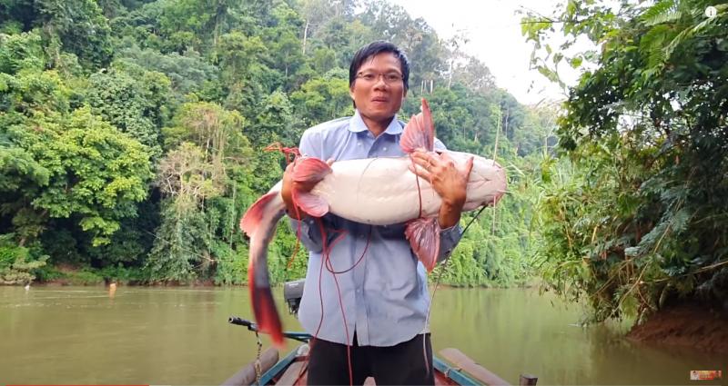 Kinh ngạc xem hội anh em vào rừng già săn cá lăng nặng hơn 15 kg!!! - Ảnh 3.